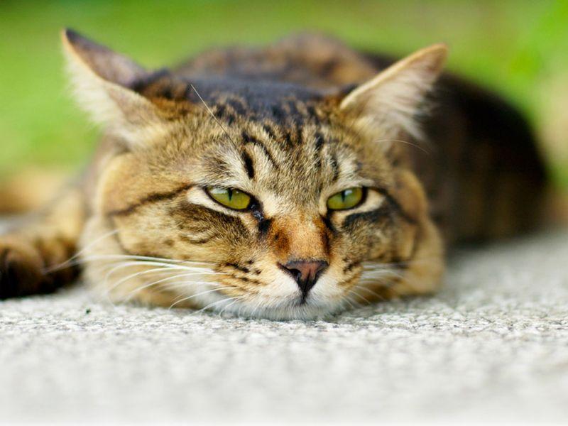 Картинки усталый кот