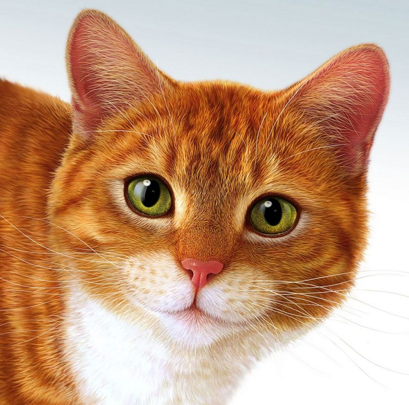Рыжие коты с зелёными глазами