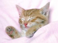 cute-kitten-sleeps-under-pink-blanket.jpg