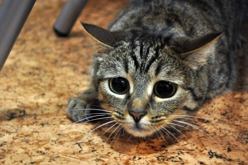 милые коты картинки на рабочий стол