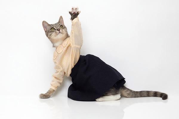 Кошка в юбке картинках