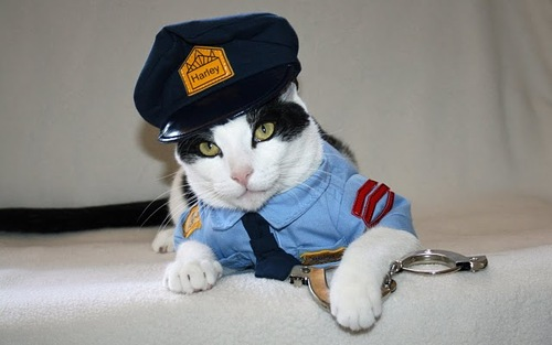 kot-v-kostume-politsejskogo.jpg