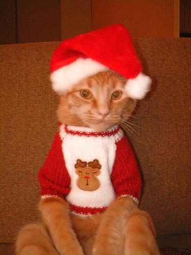 Новогодние костюмы кота своими руками 68