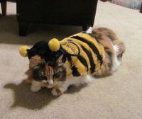 Кошка В Костюме Пчелы