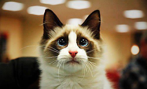 Кот жалобными глазами