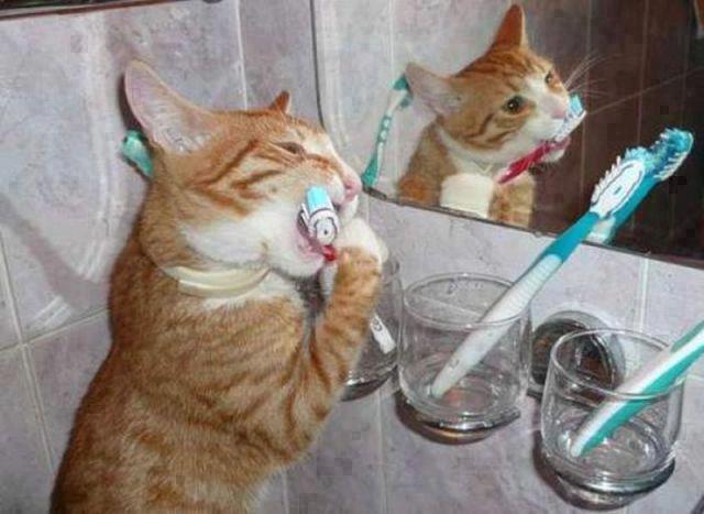 Коты с зубной щеткой