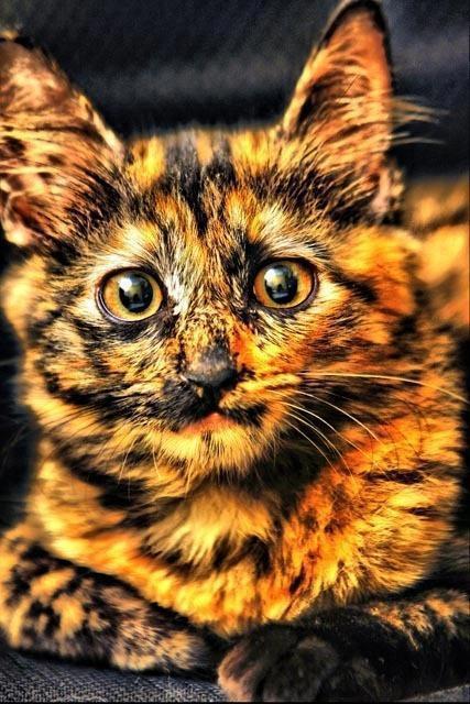 Кот необычного окраса