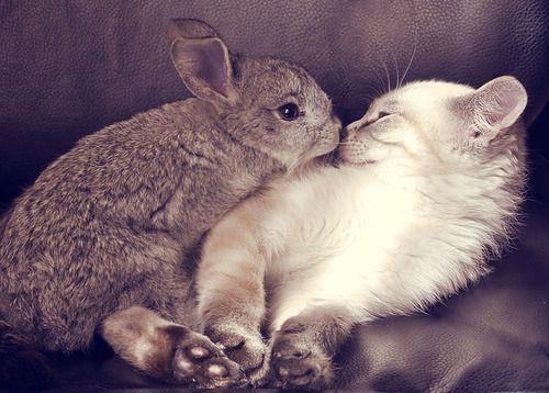 Кролик целует котенка