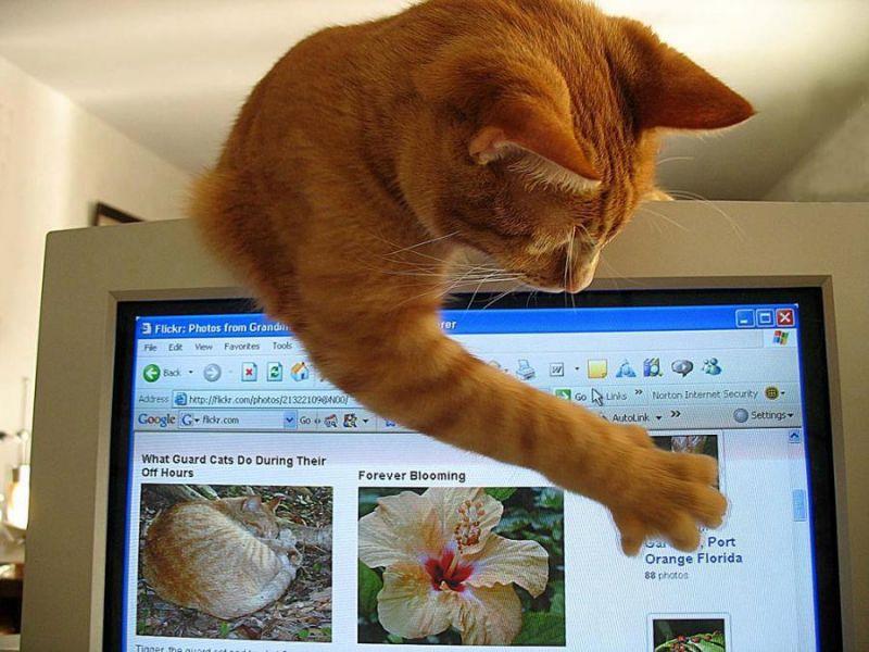 Курсор для кота